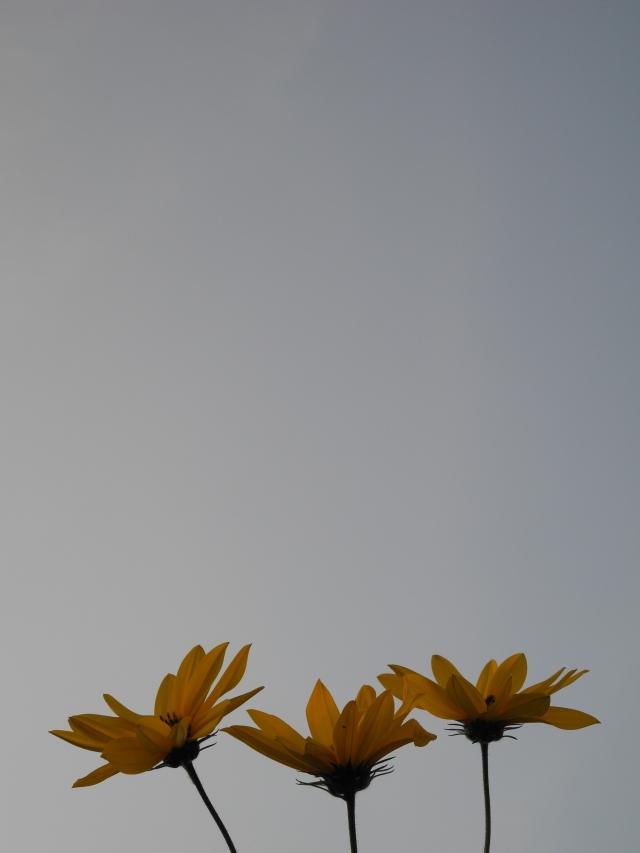 2013_09_27
